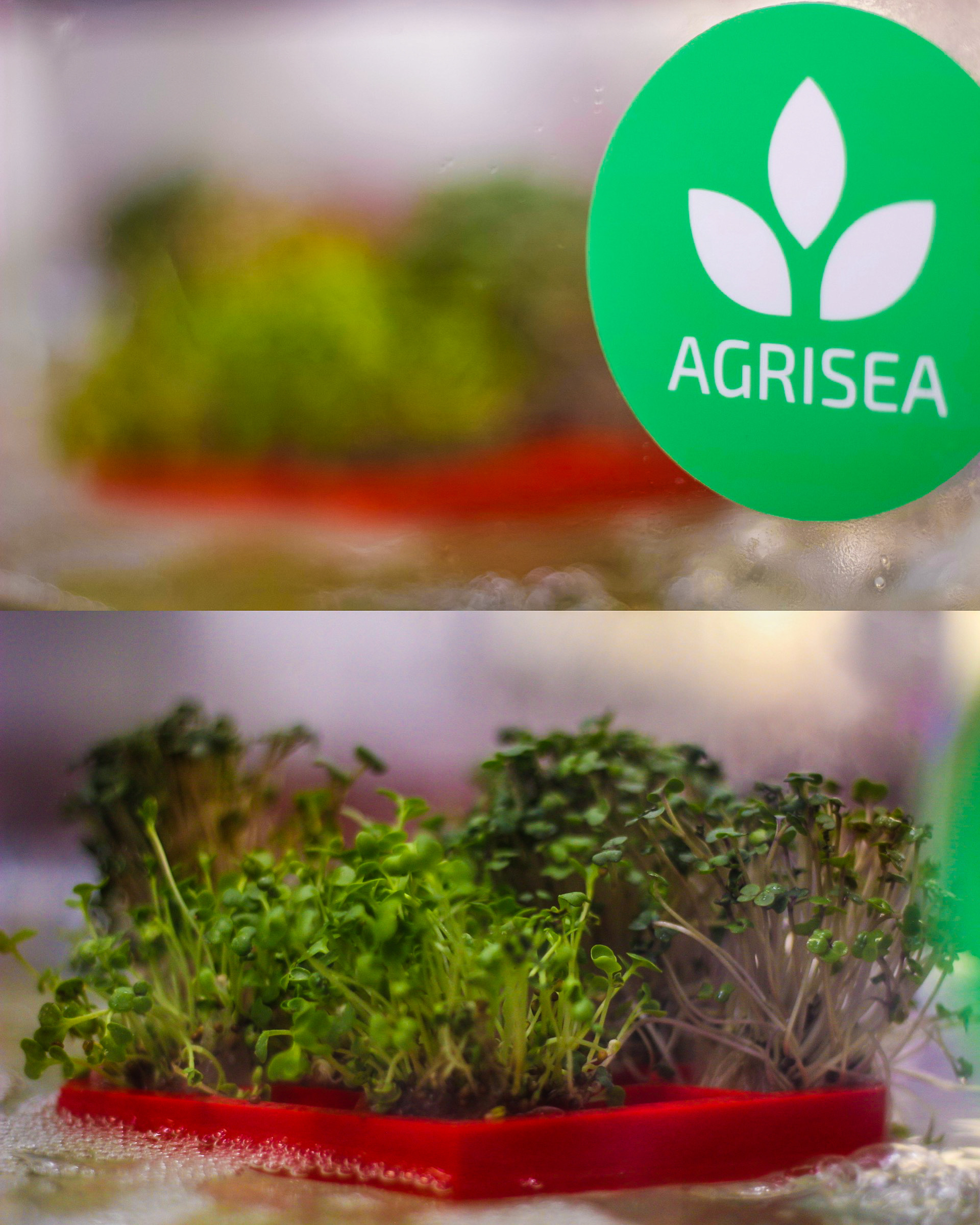 Agrisea's First Prototype Farm