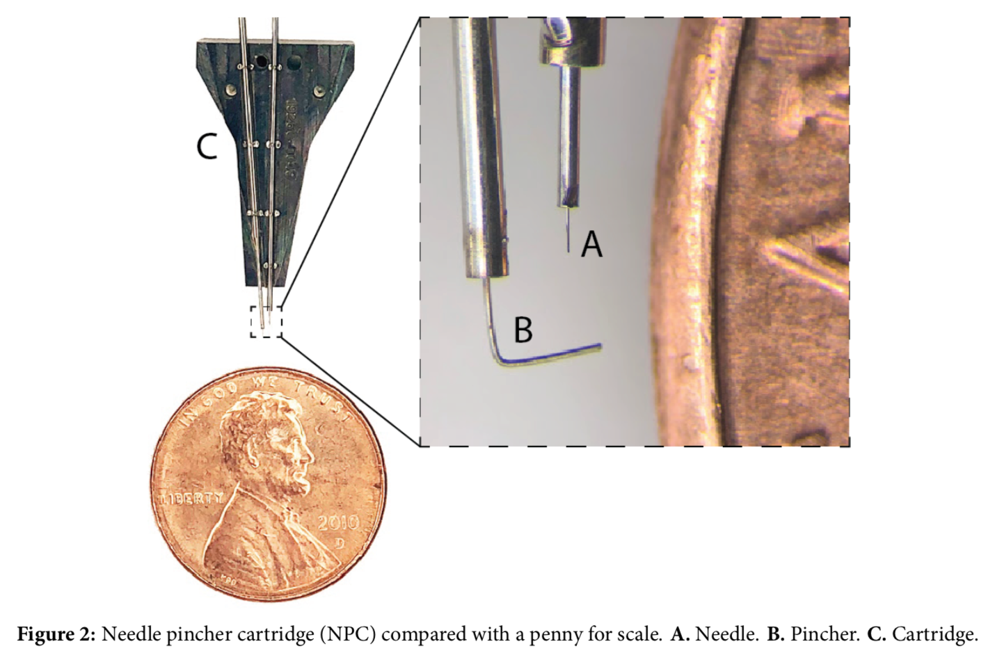 Image demonstrating the size of the insertion needle found on the Neuralink surgical robot.